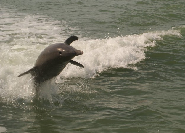 dolphin10