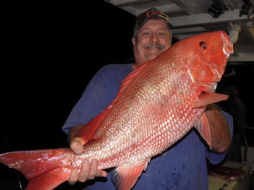 Big American Red Snapper