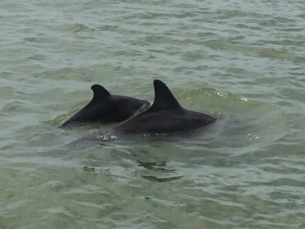 dolphins unposted (32)