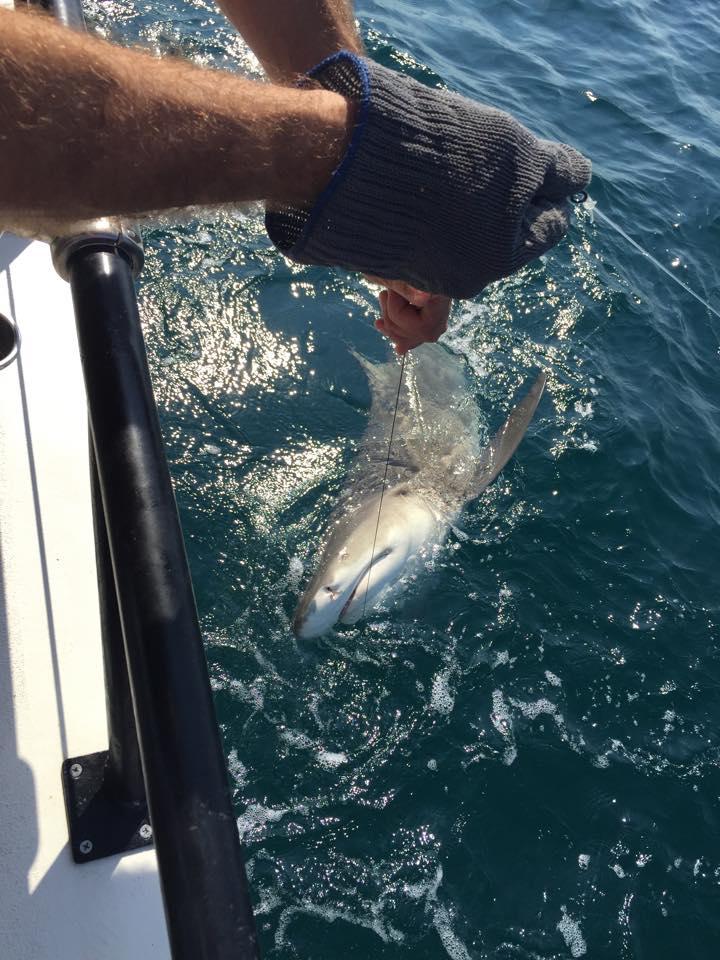 5 hour trophy shark trip