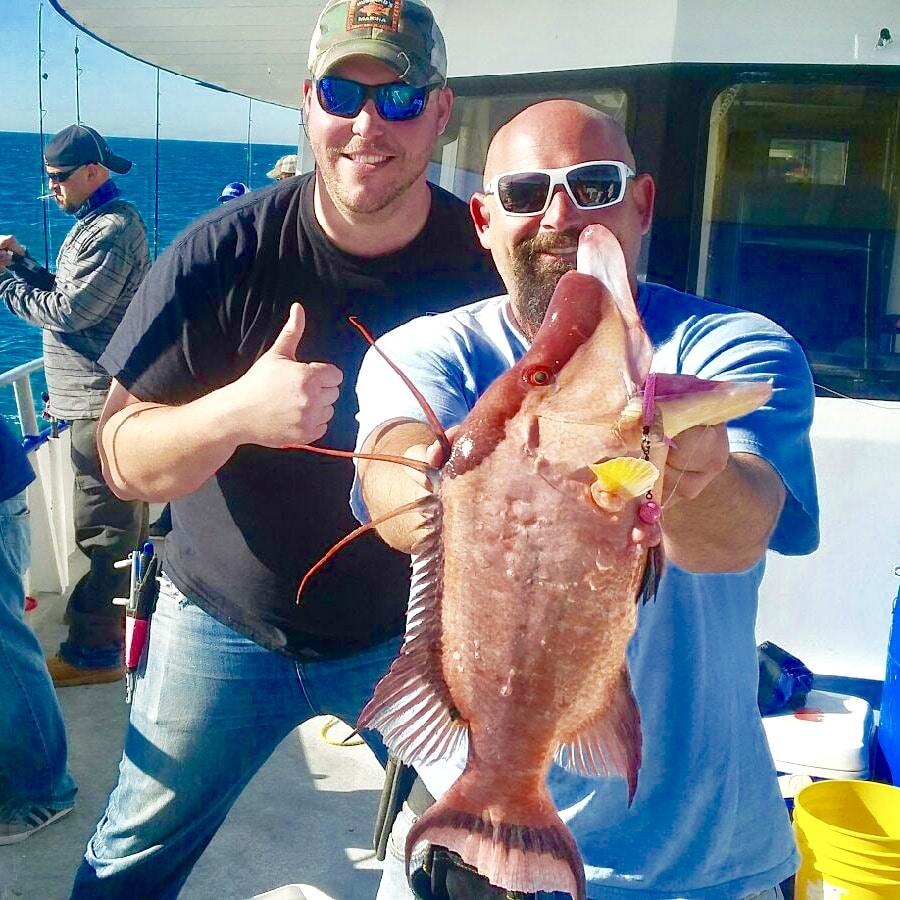 Monster Hog Fish caught By Hubbard's Marina in Johns Pass, FL